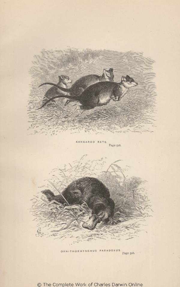 Ot, dziwa natury - dziobaki, kangury...